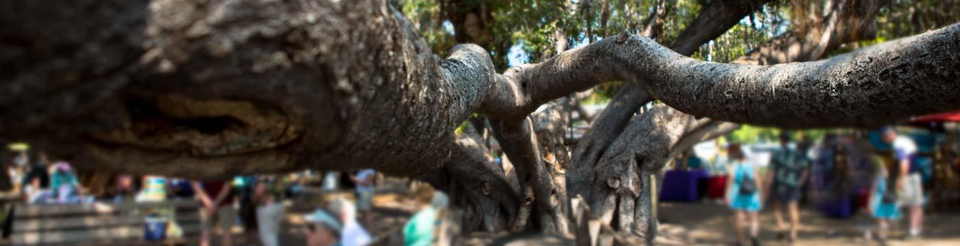Banyan Tree Poem