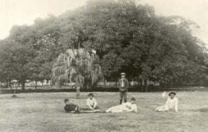 1908 Lahaina Banyan Tree
