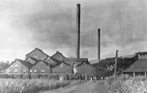 Pioneer Mill Stacks