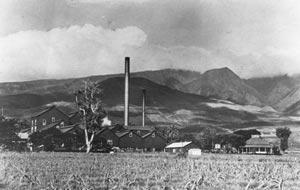 Pioneer Mill Store Scene