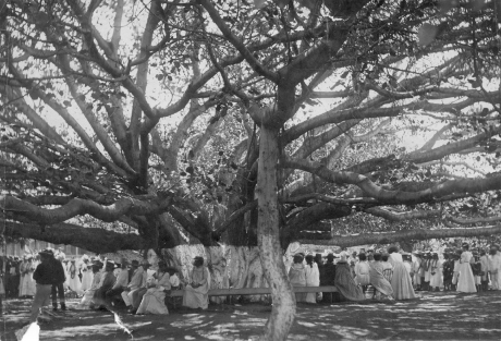 Community gathering under Lahaina's Banyan Tree