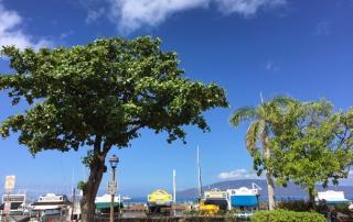 Lahaina Harbor front May'16 web
