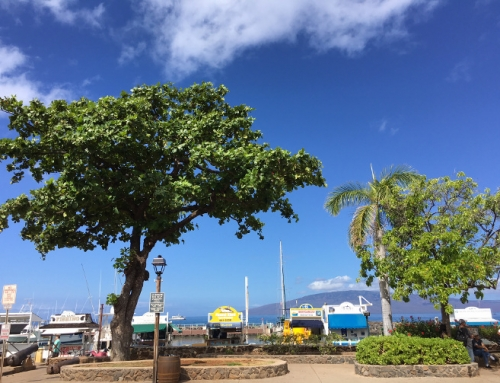 Lahaina Harbor Improvements Work on Phase 1 Starts